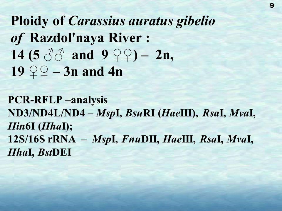 Ploidy of Carassius auratus gibelio of Razdol naya River : 14 (5 ♂♂ and 9 ♀♀) – 2n, 19 ♀♀ – 3n and 4n PCR-RFLP –analysis ND3/ND4L/ND4 – MspI, BsuRI (HaeIII), RsaI, MvaI, Hin6I (HhaI); 12S/16S rRNA – MspI, FnuDII, HaeIII, RsaI, MvaI, HhaI, BstDEI 9