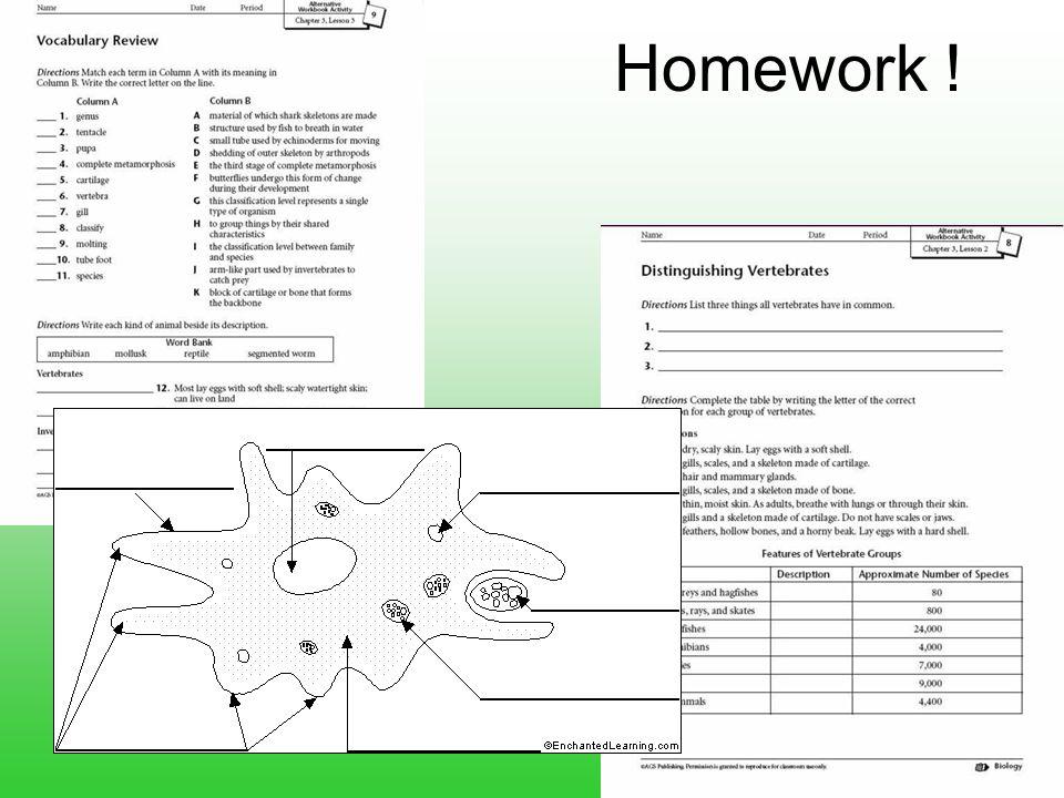 Homework !