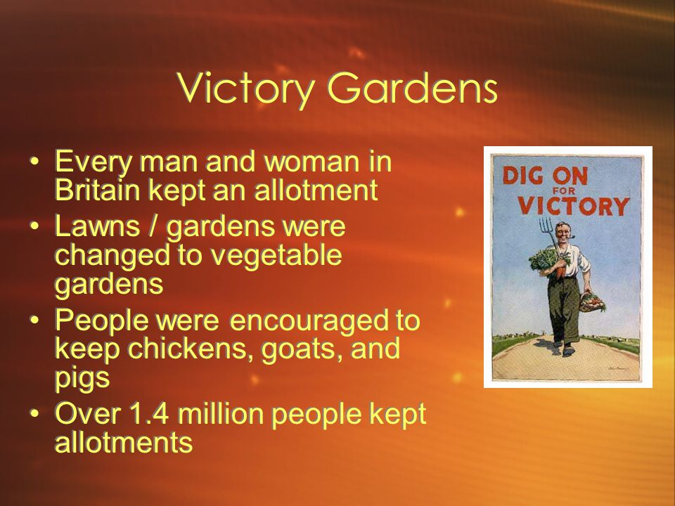 Victory Gardens Every man and woman in Britain kept an allotment Lawns / gardens were changed to vegetable gardens People were encouraged to keep chickens, goats, and pigs Over 1.4 million people kept allotments Every man and woman in Britain kept an allotment Lawns / gardens were changed to vegetable gardens People were encouraged to keep chickens, goats, and pigs Over 1.4 million people kept allotments