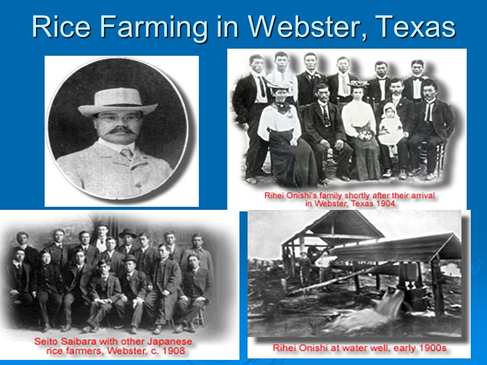 Rice Farming in Webster, Texas