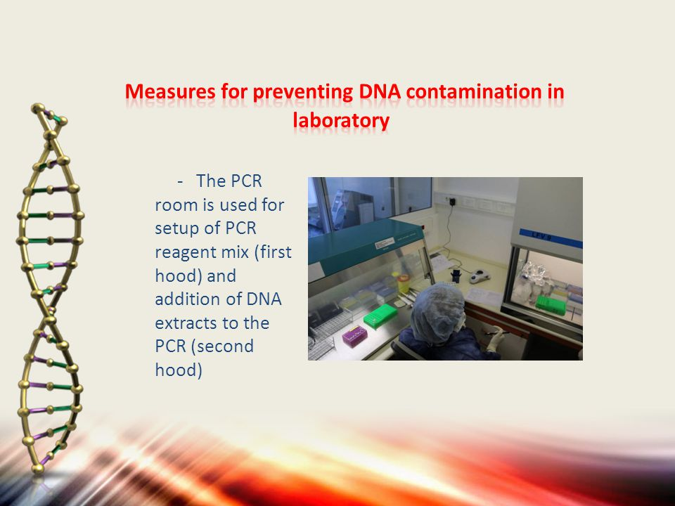 - The PCR room is used for setup of PCR reagent mix (first hood) and addition of DNA extracts to the PCR (second hood)