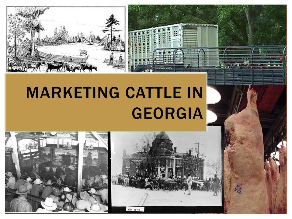 MARKETING CATTLE IN GEORGIA