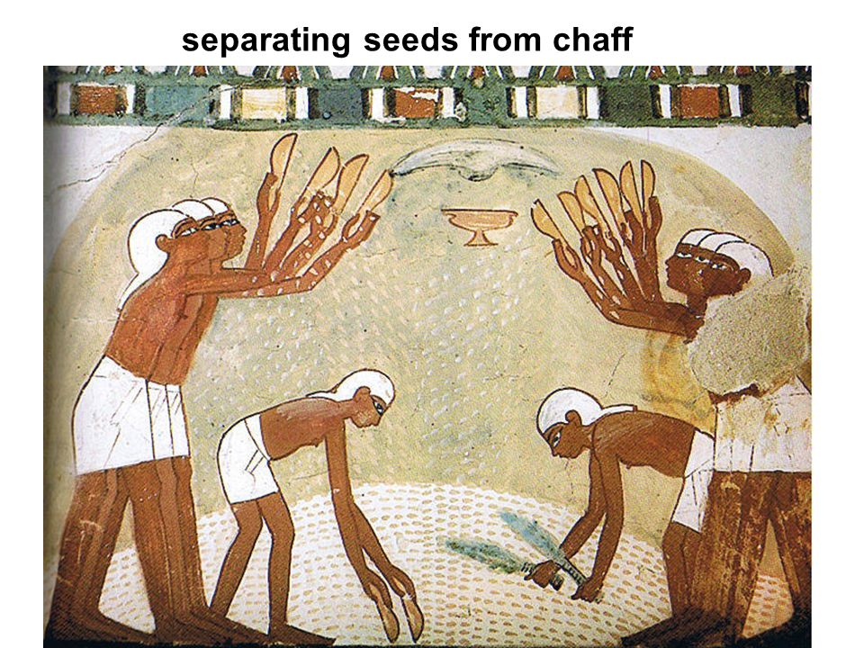 separating seeds from chaff