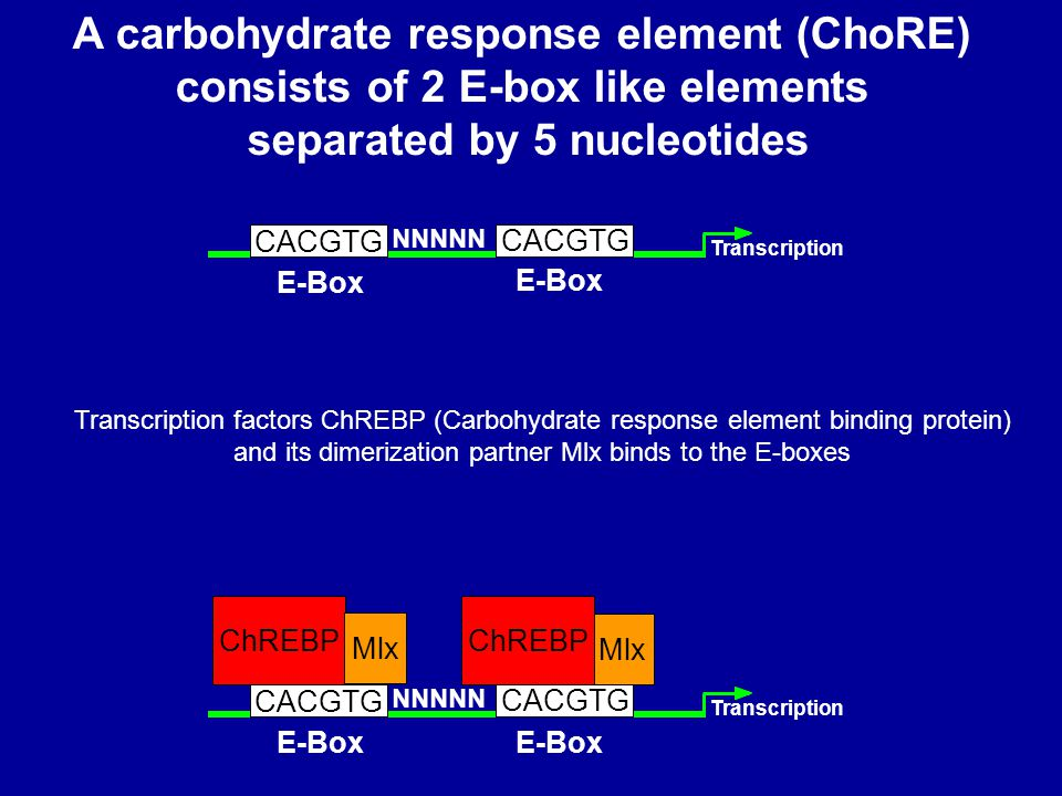 A carbohydrate response element (ChoRE) consists of 2 E-box like elements separated by 5 nucleotides E-Box Transcription CACGTG ChREBP Mlx NNNNN CACGTG E-Box Mlx E-Box Transcription CACGTG NNNNN CACGTG E-Box ChREBP Transcription factors ChREBP (Carbohydrate response element binding protein) and its dimerization partner Mlx binds to the E-boxes
