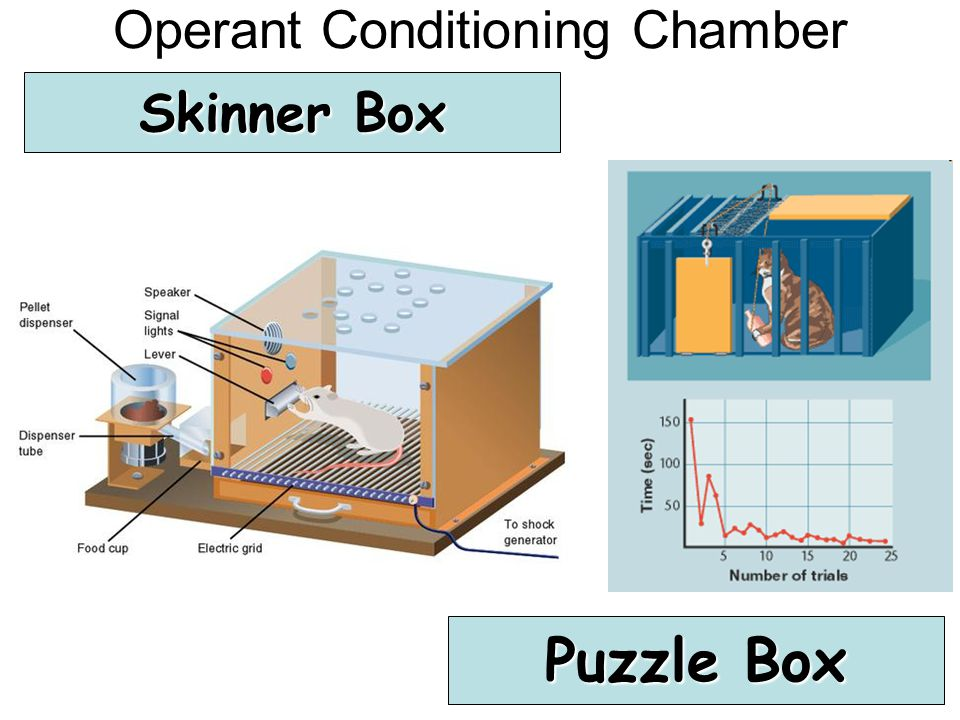 Operant Conditioning Chamber Skinner Box Puzzle Box