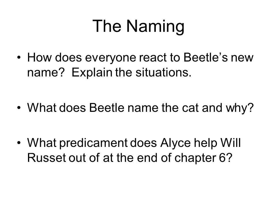 The Naming How does everyone react to Beetle's new name? Explain the situations. What does Beetle name the cat and why? What predicament does Alyce he