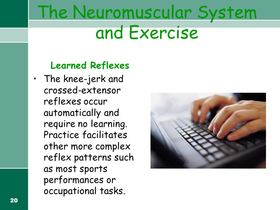 20 The Neuromuscular System and Exercise Learned Reflexes The knee-jerk and crossed-extensor reflexes occur automatically and require no learning. Pra