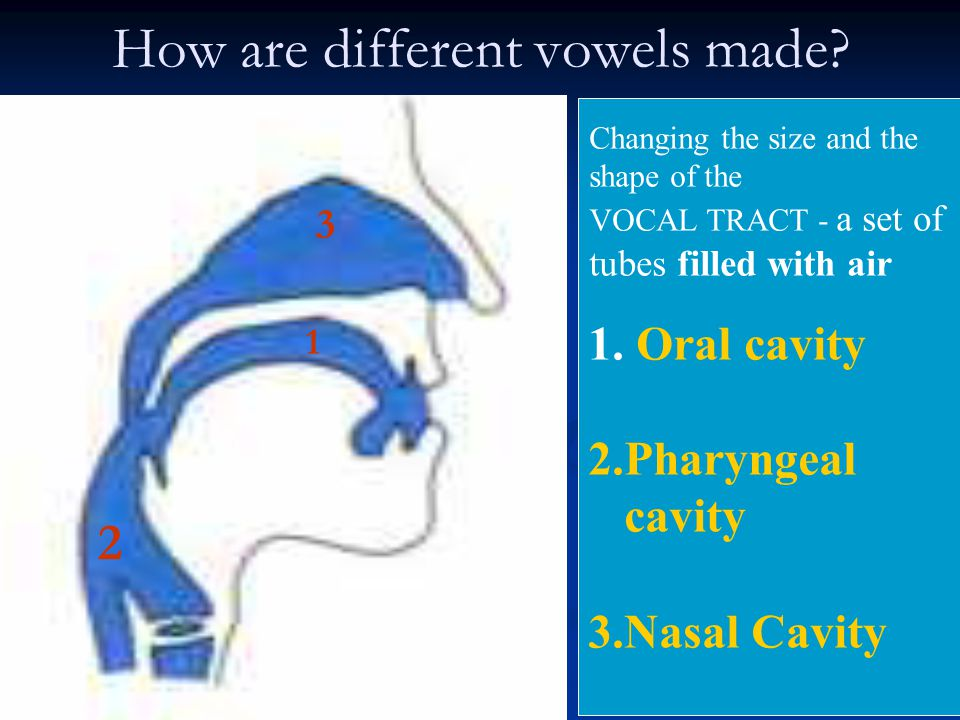 How are different vowels made? 2 1 3 Changing the size and the shape of the VOCAL TRACT - a set of tubes filled with air 1. Oral cavity 2.Pharyngeal c