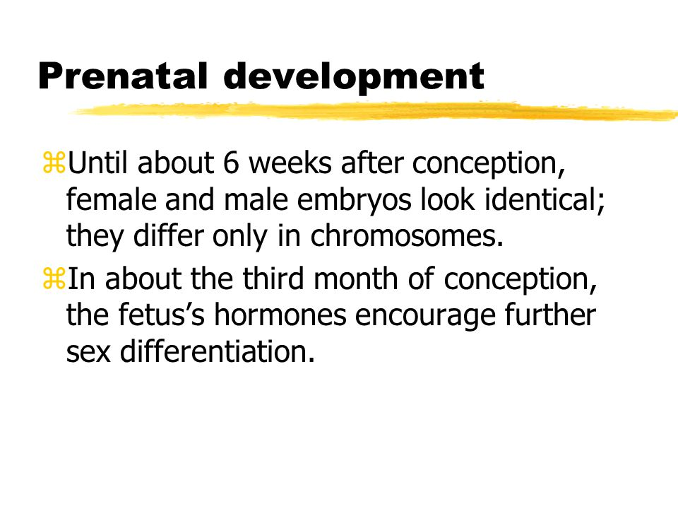 Prenatal development zUntil about 6 weeks after conception, female and male embryos look identical; they differ only in chromosomes.