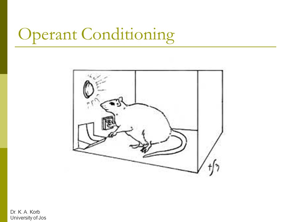 Operant Conditioning  Law of effect: Responses followed by positive outcomes are repeated while those followed by negative outcomes are not  Operant Conditioning: Learn to behave in ways that result in reinforcement Dr.