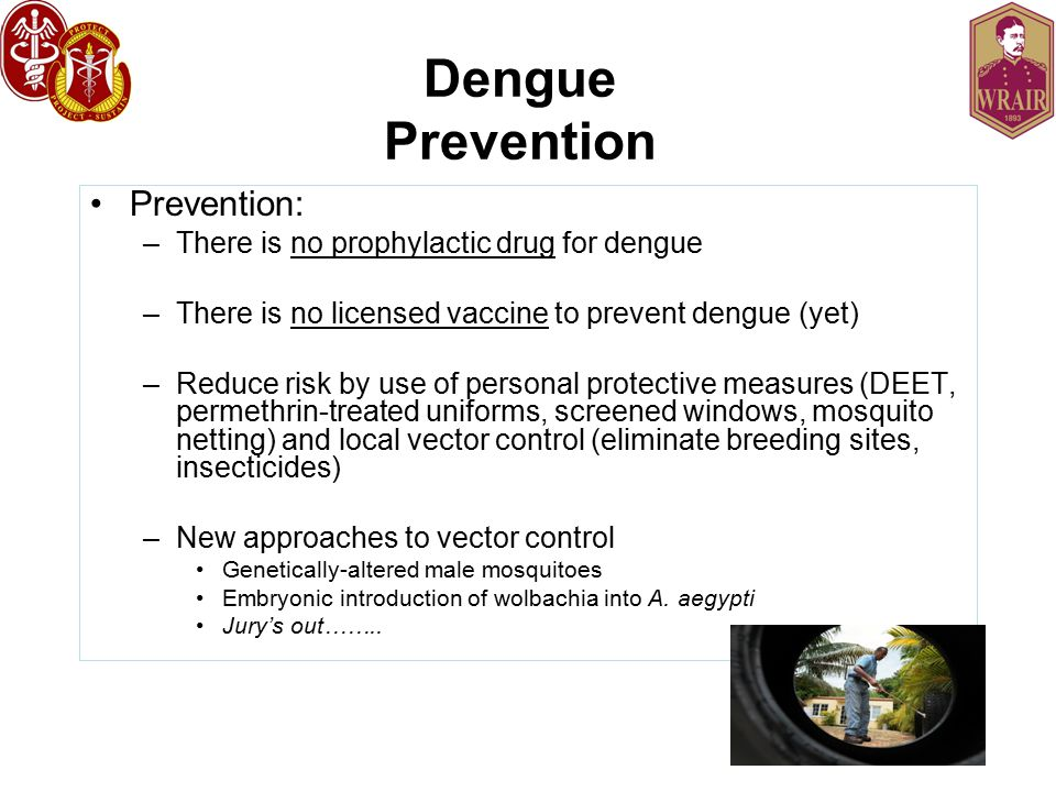 Dengue Prevention Prevention: –There is no prophylactic drug for dengue –There is no licensed vaccine to prevent dengue (yet) –Reduce risk by use of personal protective measures (DEET, permethrin-treated uniforms, screened windows, mosquito netting) and local vector control (eliminate breeding sites, insecticides) –New approaches to vector control Genetically-altered male mosquitoes Embryonic introduction of wolbachia into A.
