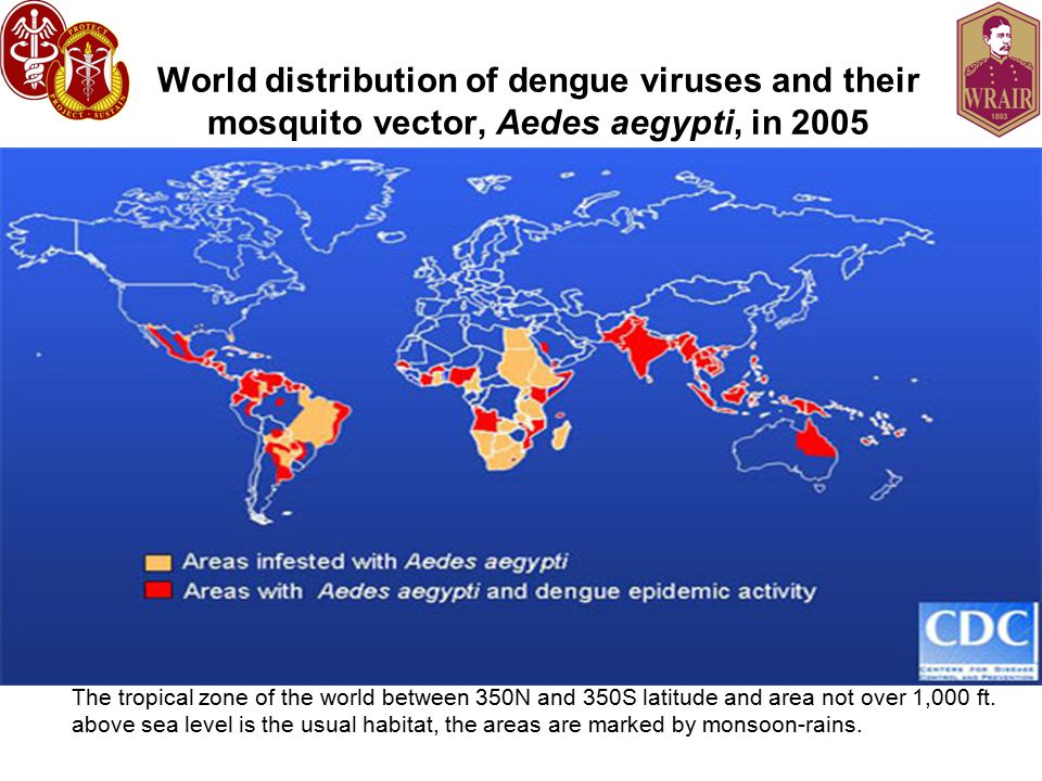 World distribution of dengue viruses and their mosquito vector, Aedes aegypti, in 2005 The tropical zone of the world between 350N and 350S latitude and area not over 1,000 ft.