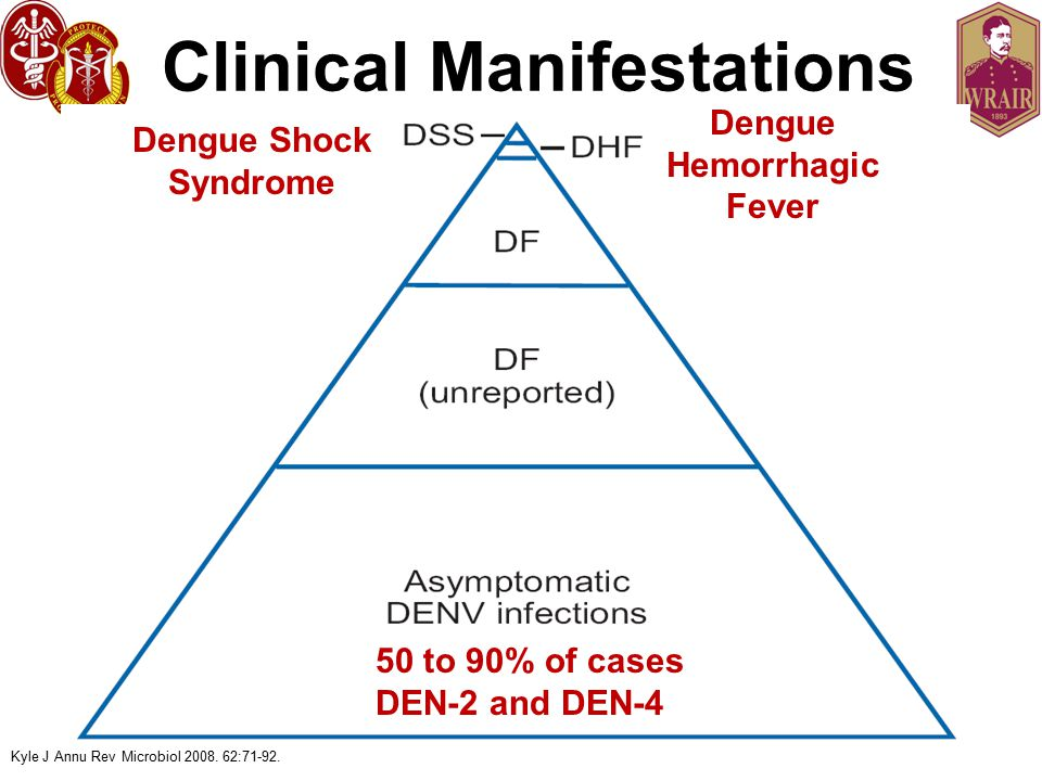 Clinical Manifestations 50 to 90% of cases DEN-2 and DEN-4 Kyle J Annu Rev Microbiol 2008.