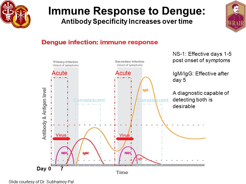 Immune Response to Dengue: Antibody Specificity Increases over time Acute Convalescent Day 0 7 NS-1: Effective days 1-5 post onset of symptoms IgM/IgG: Effective after day 5 A diagnostic capable of detecting both is desirable Slide courtesy of Dr.