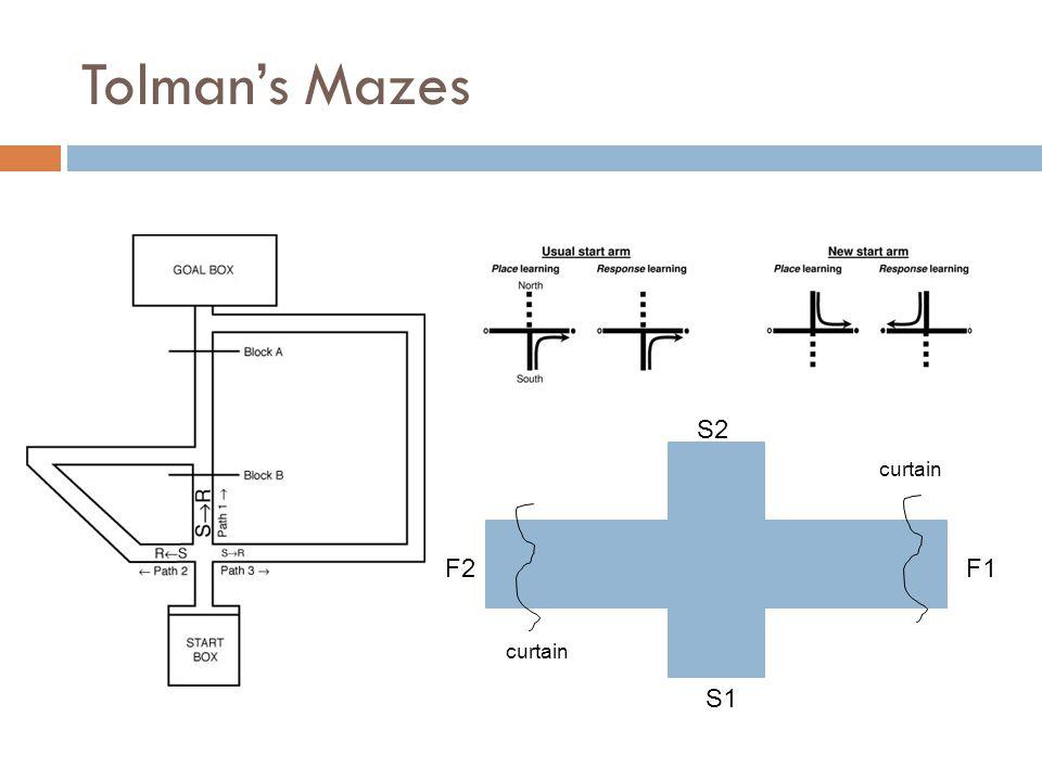 Tolman's Mazes S2 S1 F1F2 curtain