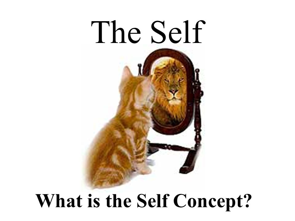 What is the Self Concept The Self