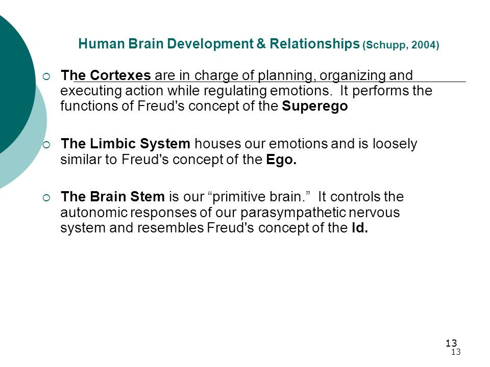 13 Human Brain Development & Relationships (Schupp, 2004)  The Cortexes are in charge of planning, organizing and executing action while regulating emotions.
