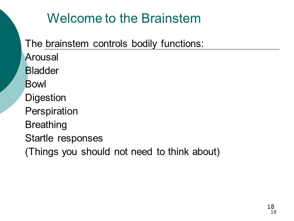 18 Welcome to the Brainstem The brainstem controls bodily functions: Arousal Bladder Bowl Digestion Perspiration Breathing Startle responses (Things you should not need to think about)