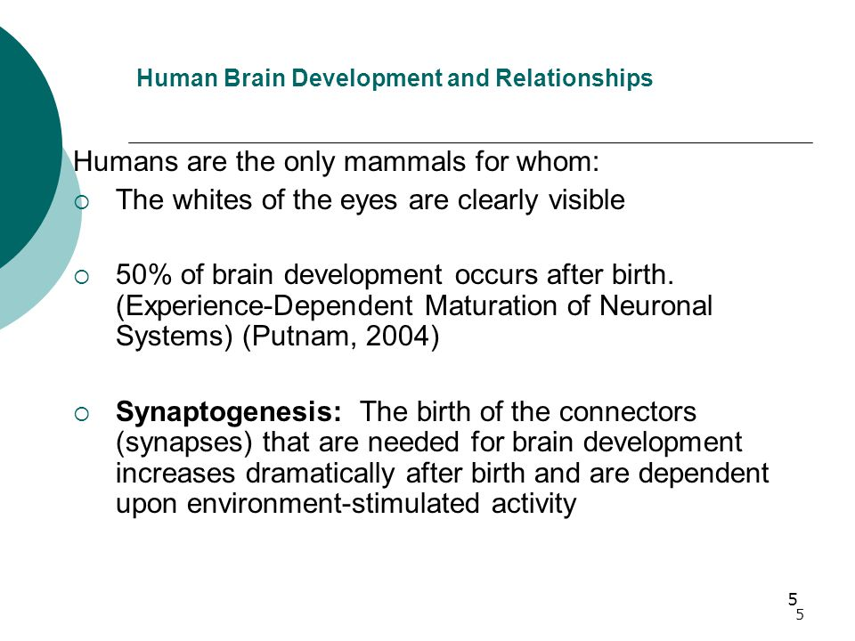 5 5 Human Brain Development and Relationships Humans are the only mammals for whom:  The whites of the eyes are clearly visible  50% of brain development occurs after birth.