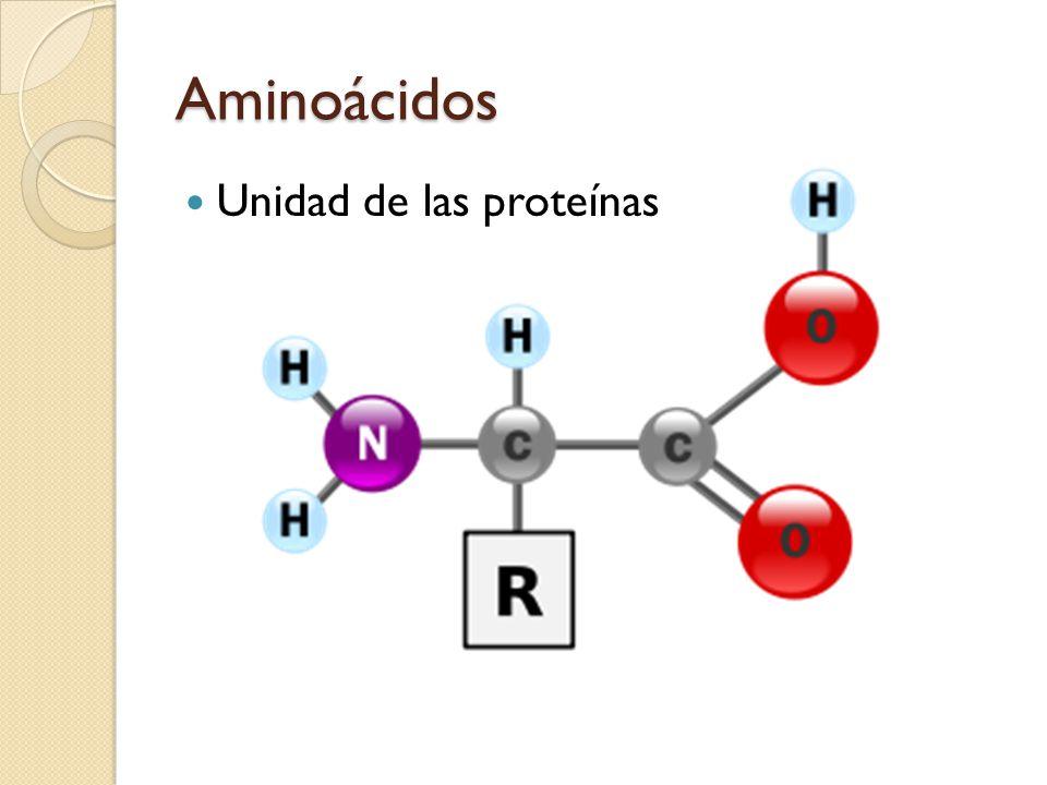 Aminoácidos Unidad de las proteínas