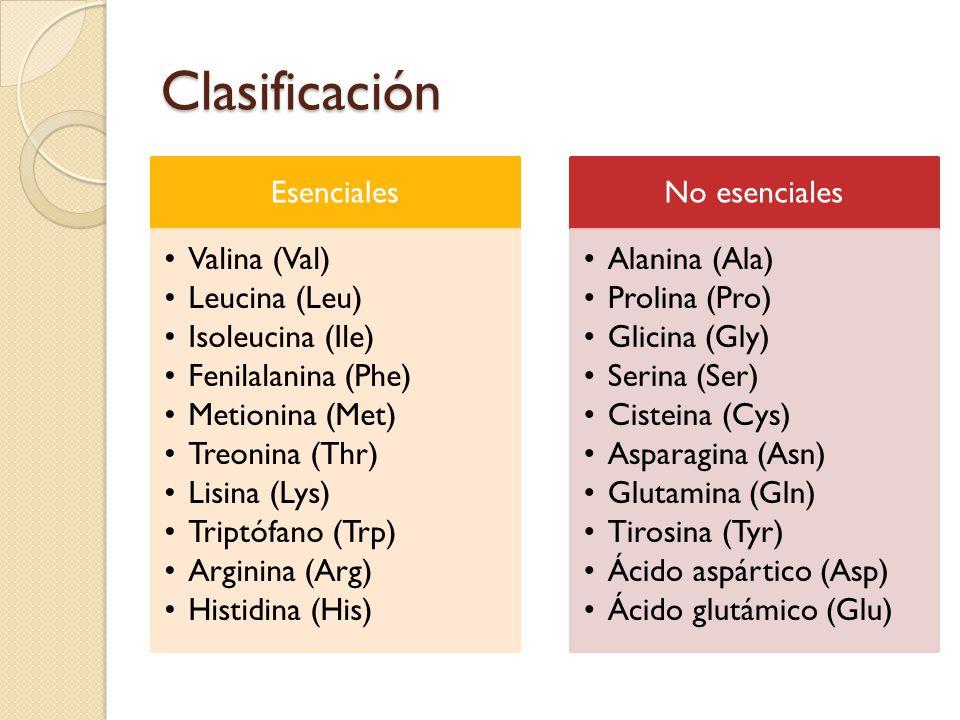 Clasificación Esenciales Valina (Val) Leucina (Leu) Isoleucina (Ile) Fenilalanina (Phe) Metionina (Met) Treonina (Thr) Lisina (Lys) Triptófano (Trp) Arginina (Arg) Histidina (His) No esenciales Alanina (Ala) Prolina (Pro) Glicina (Gly) Serina (Ser) Cisteina (Cys) Asparagina (Asn) Glutamina (Gln) Tirosina (Tyr) Ácido aspártico (Asp) Ácido glutámico (Glu)