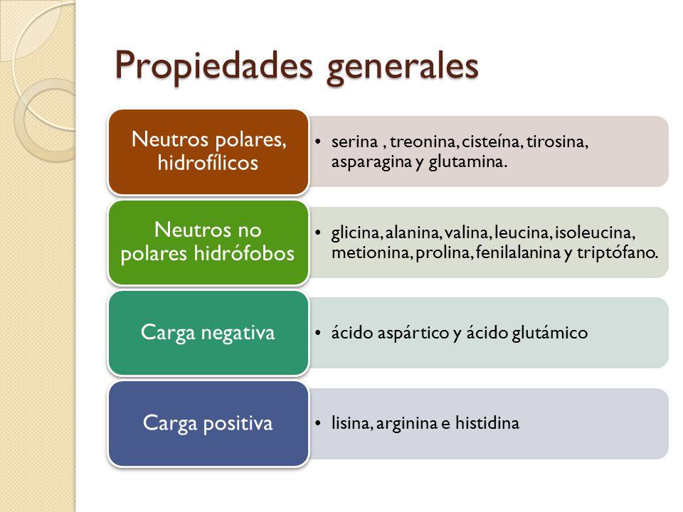 Propiedades generales serina, treonina, cisteína, tirosina, asparagina y glutamina.