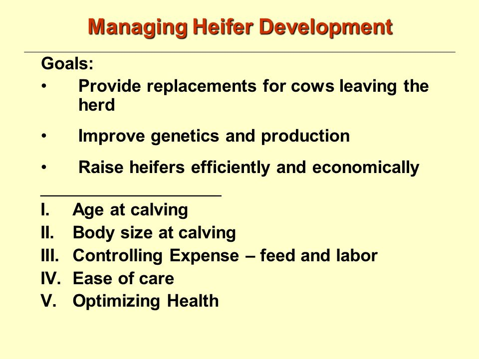 From Weaning to Breeding Heifers should be moved to a group pen Start feeding calf grower diet Calf grower can be fed, ad libitum, until ------ -------------- age Feeding -------------------is not advisable Provide good quality hay Do not forget clean and adequate water Provide an adequate feeder space