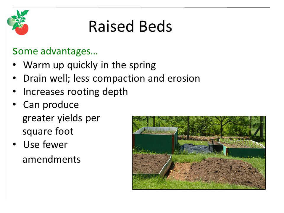 Raised Beds s ome advantages… Warm up quickly in the spring Drain well; less compaction and erosion Increases rooting depth Can produce greater yields
