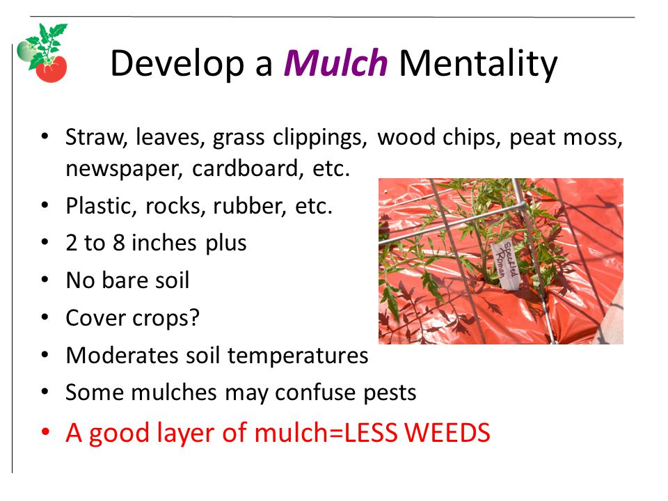 Develop a Mulch Mentality Straw, leaves, grass clippings, wood chips, peat moss, newspaper, cardboard, etc. Plastic, rocks, rubber, etc. 2 to 8 inches
