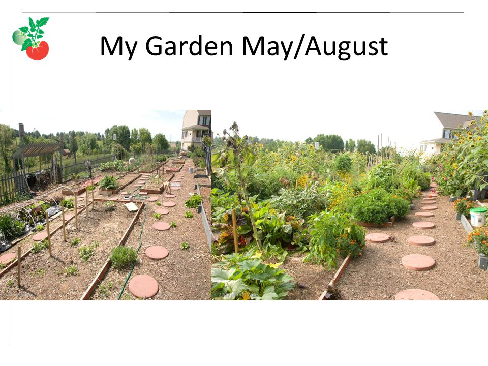 My Garden May/August