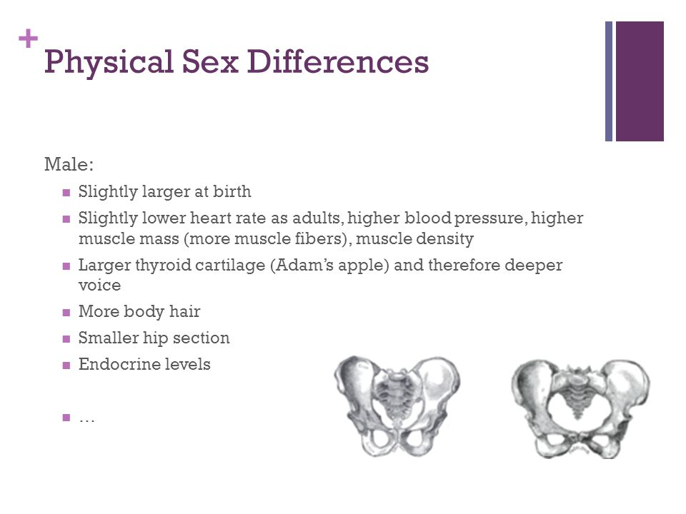 + Physical Sex Differences Male: Slightly larger at birth Slightly lower heart rate as adults, higher blood pressure, higher muscle mass (more muscle fibers), muscle density Larger thyroid cartilage (Adam's apple) and therefore deeper voice More body hair Smaller hip section Endocrine levels …