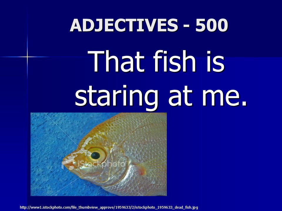 ADJECTIVES - 500 That fish is staring at me.
