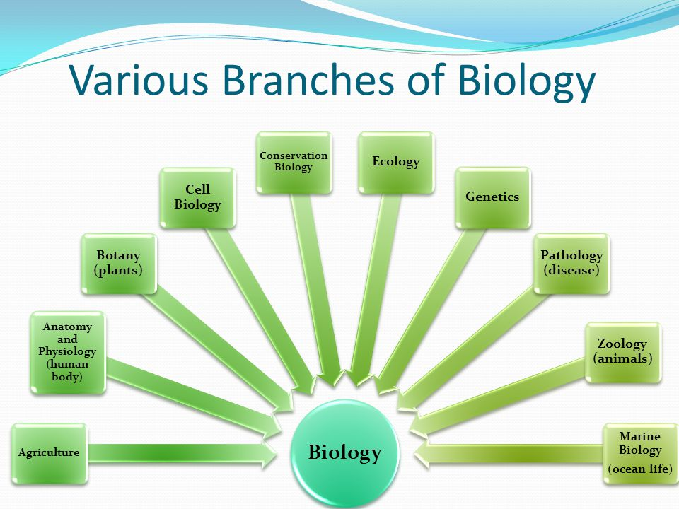 Various Branches of Biology Biology Agriculture Anatomy and Physiology (human body) Botany (plants) Cell Biology Conservation Biology EcologyGenetics