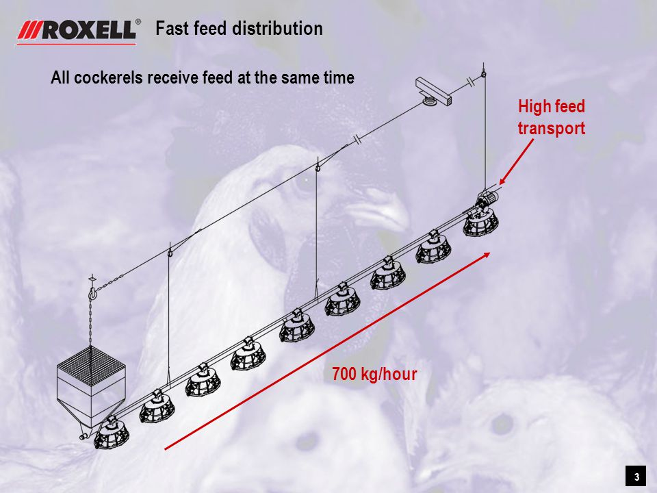 3 3 Fast feed distribution All cockerels receive feed at the same time 700 kg/hour High feed transport