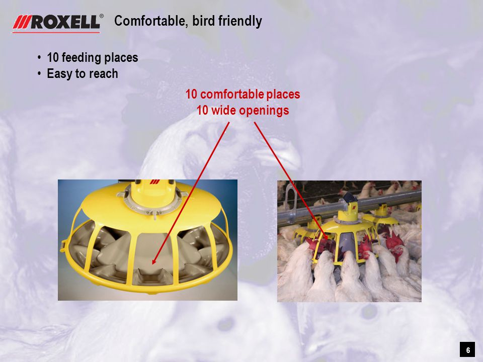 6 6 Comfortable, bird friendly 10 feeding places Easy to reach 10 comfortable places 10 wide openings
