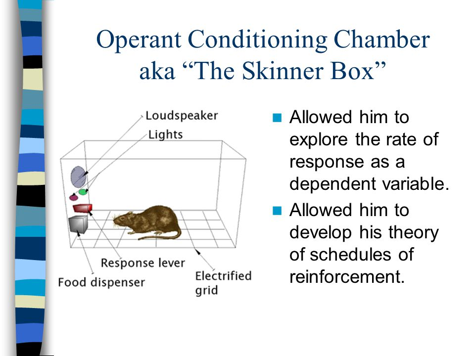 Operant Conditioning Chamber aka The Skinner Box Allowed him to explore the rate of response as a dependent variable.