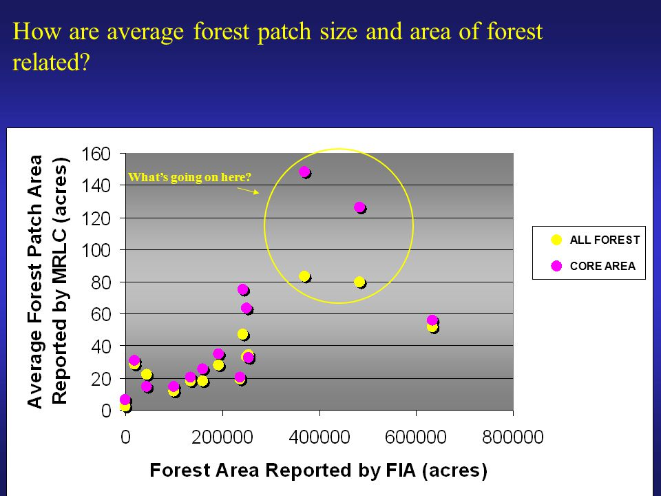 How are average forest patch size and area of forest related.