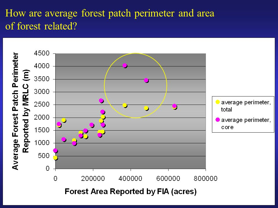 How are average forest patch perimeter and area of forest related
