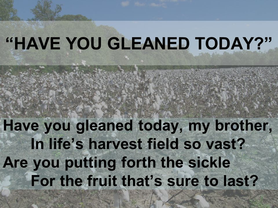 HAVE YOU GLEANED TODAY Have you gleaned today, my brother, In life's harvest field so vast.