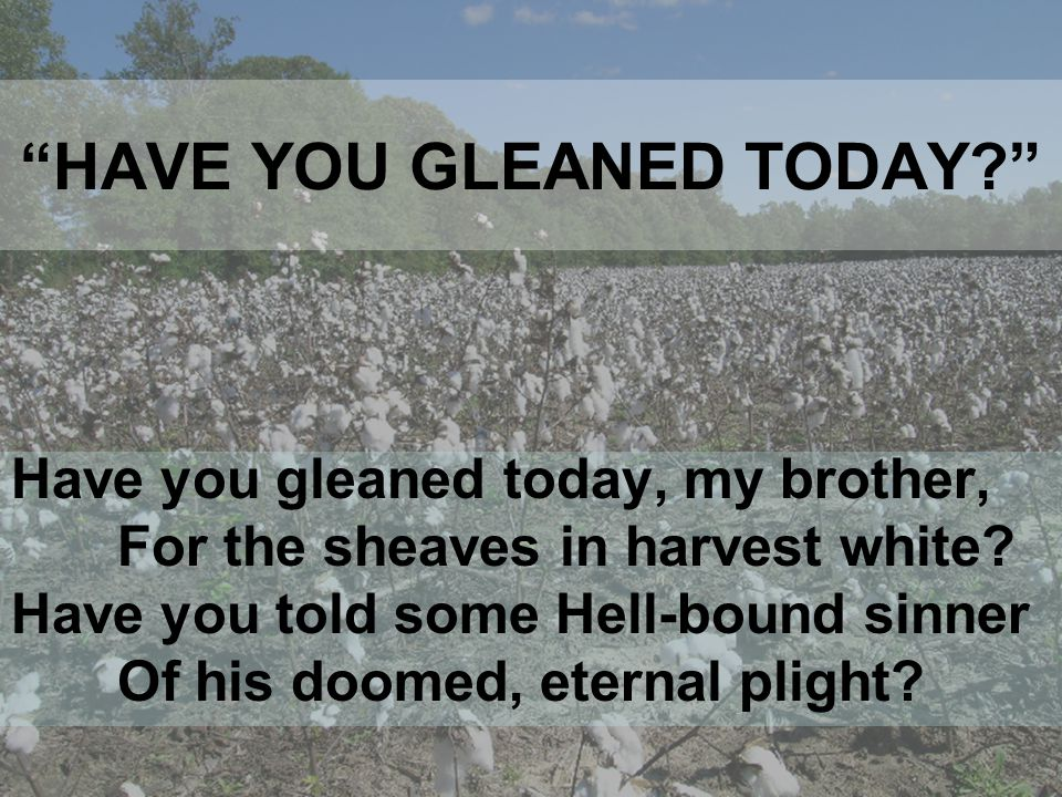 HAVE YOU GLEANED TODAY Have you gleaned today, my brother, For the sheaves in harvest white.