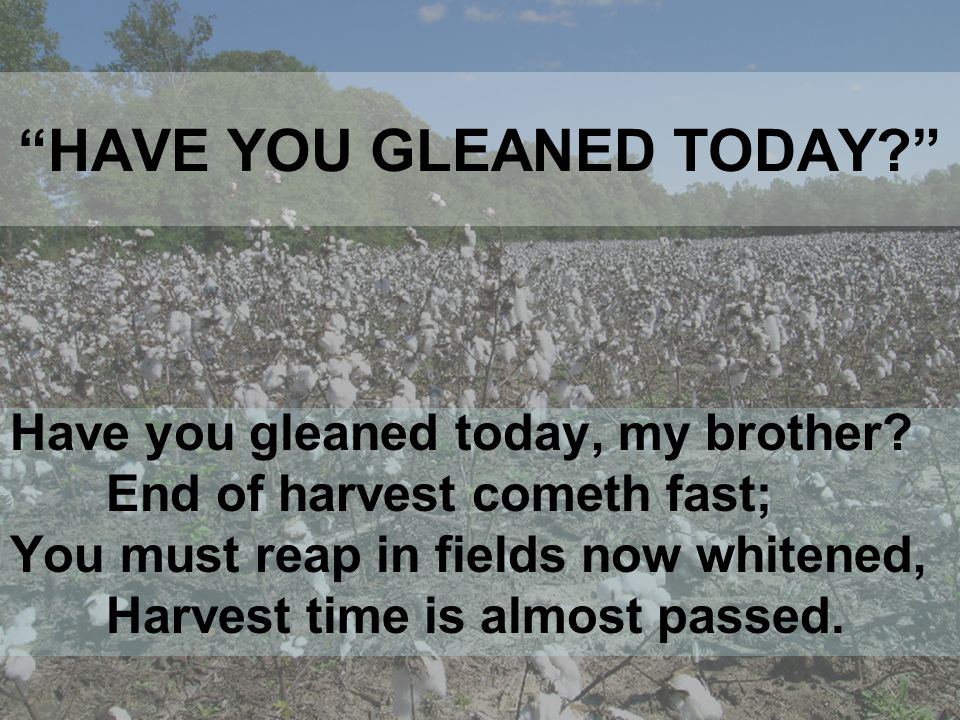 HAVE YOU GLEANED TODAY? Will you glean today, my brother, In the fields with lab'rers few.
