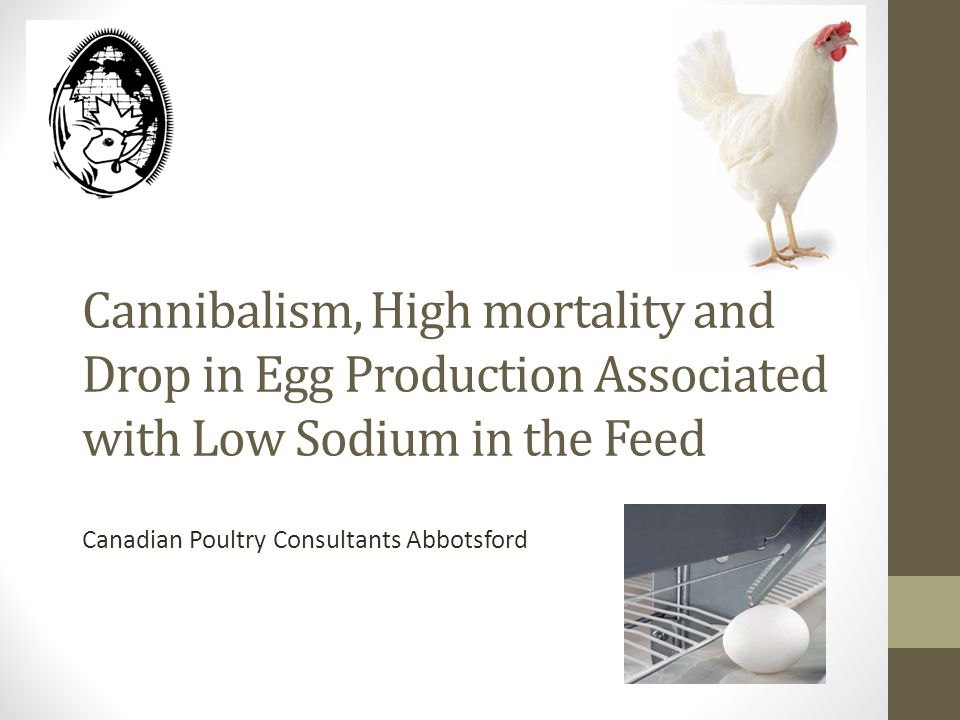 Cannibalism, High mortality and Drop in Egg Production Associated with Low Sodium in the Feed Canadian Poultry Consultants Abbotsford