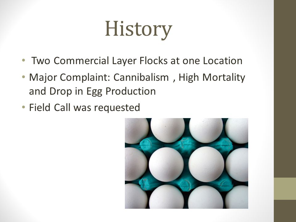History Two Commercial Layer Flocks at one Location Major Complaint: Cannibalism, High Mortality and Drop in Egg Production Field Call was requested