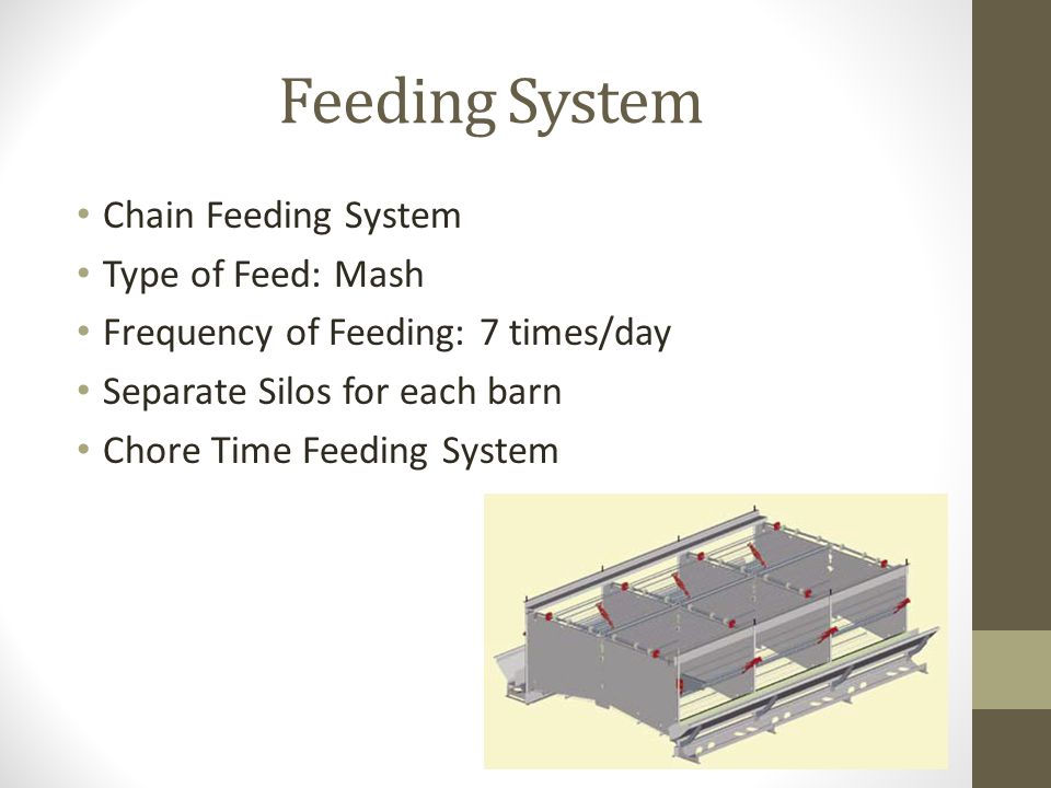 Feeding System Chain Feeding System Type of Feed: Mash Frequency of Feeding: 7 times/day Separate Silos for each barn Chore Time Feeding System
