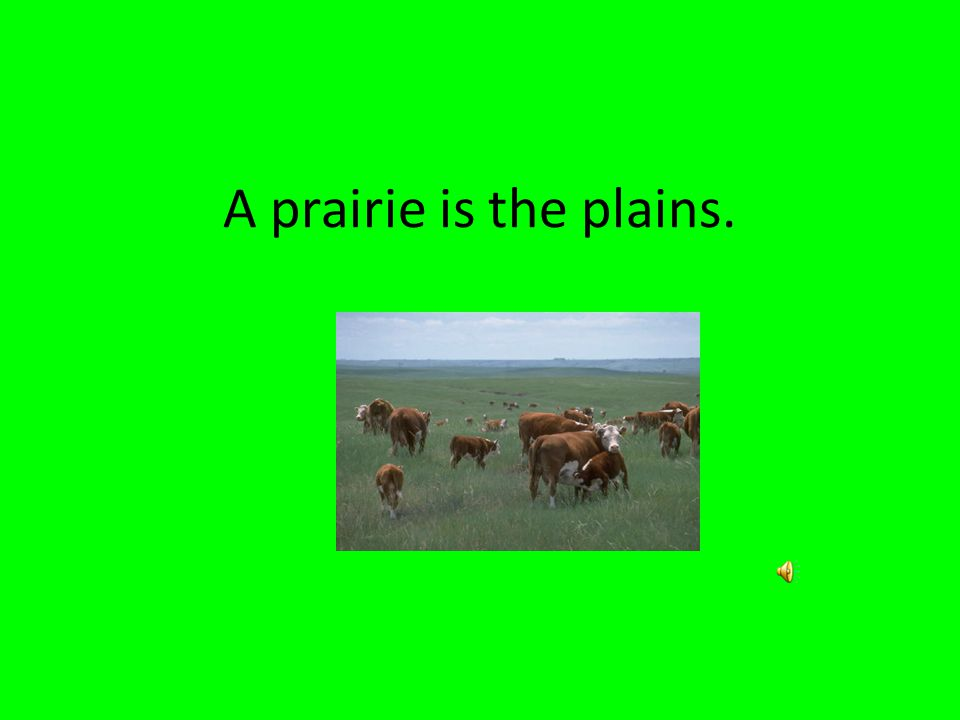 A prairie is the plains.