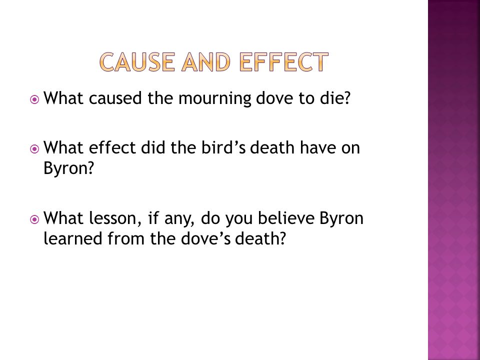  What caused the mourning dove to die?  What effect did the bird's death have on Byron?  What lesson, if any, do you believe Byron learned from the