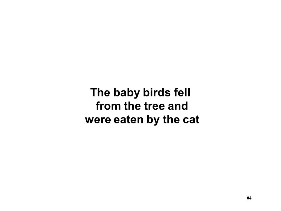 The baby birds fell from the tree and were eaten by the cat #4