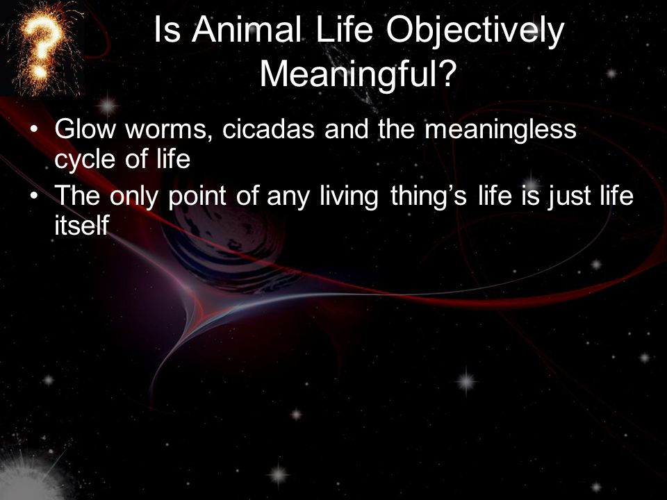 Is Animal Life Objectively Meaningful.