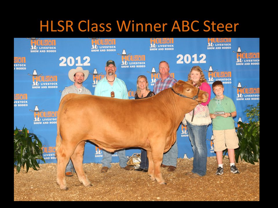 HLSR Class Winner ABC Steer