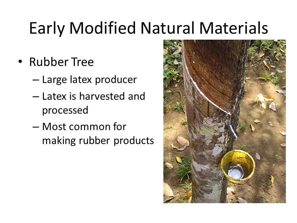 Early Modified Natural Materials Rubber Tree – Large latex producer – Latex is harvested and processed – Most common for making rubber products